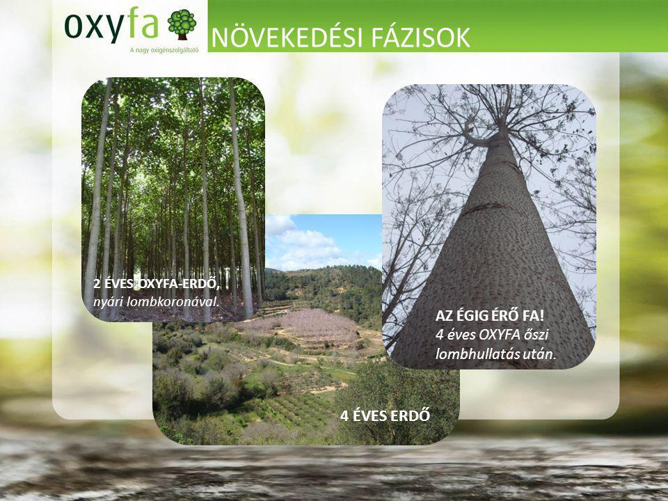 NÖVEKEDÉSI FÁZISOK 4 ÉVES ERDŐ AZ ÉGIG ÉRŐ FA! 4 éves OXYFA őszi