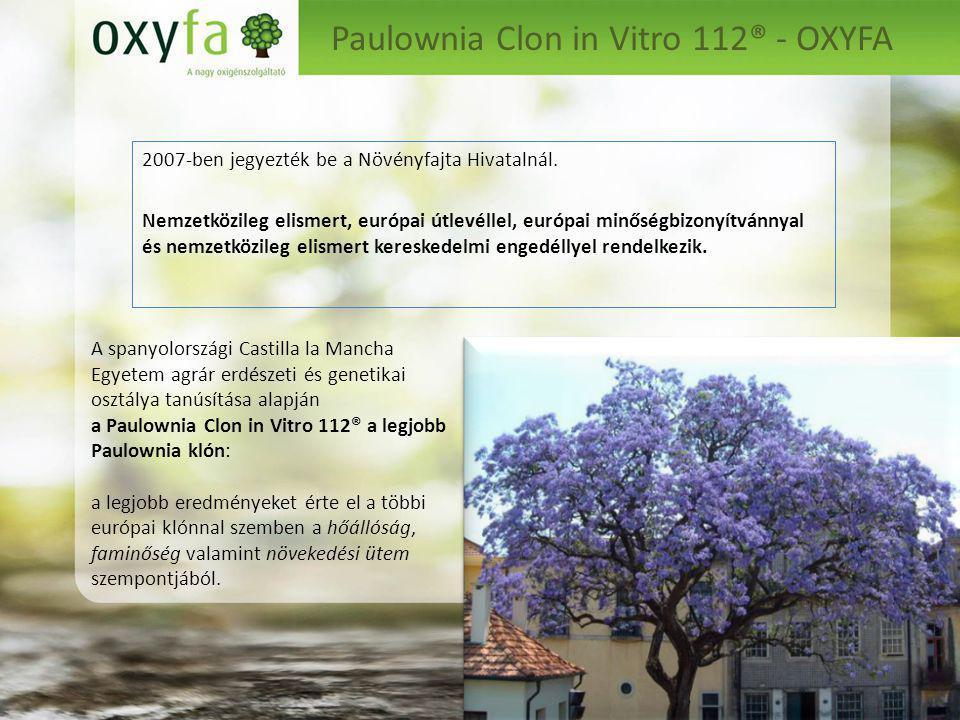 Paulownia Clon in Vitro 112® - OXYFA