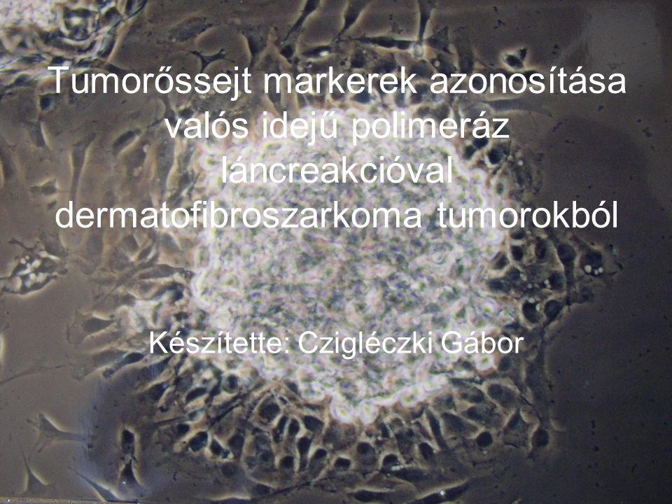 Készítette: Czigléczki Gábor