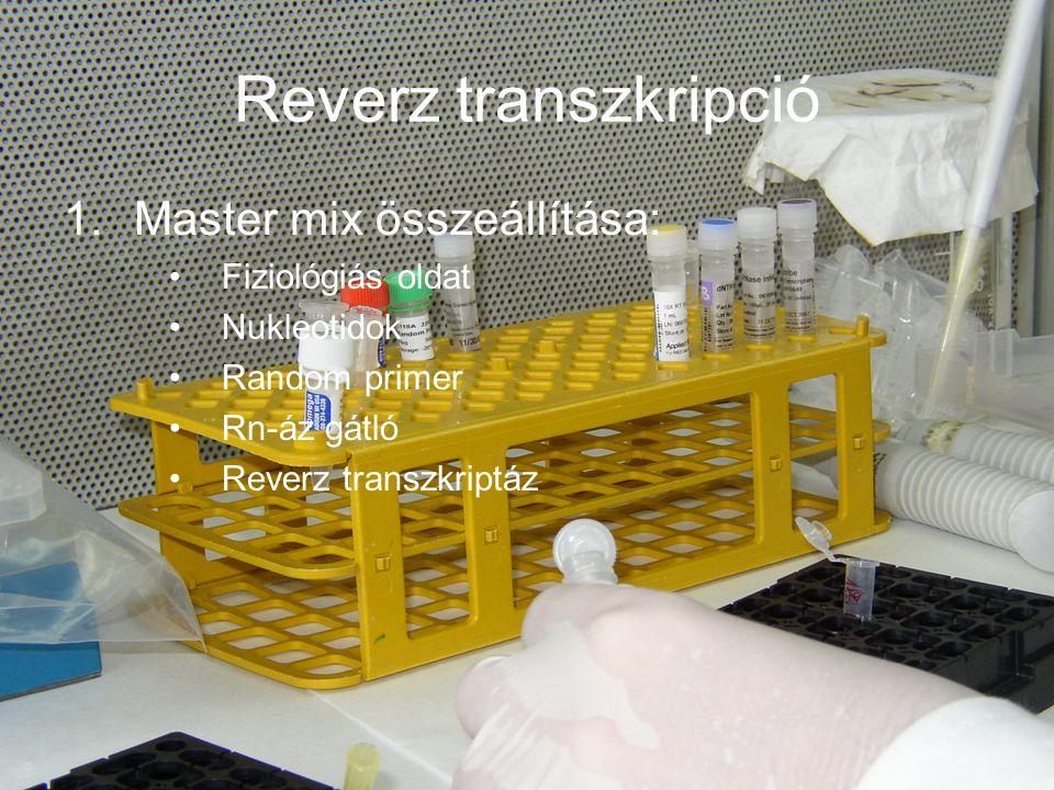 Reverz transzkripció Master mix összeállítása: Fiziológiás oldat