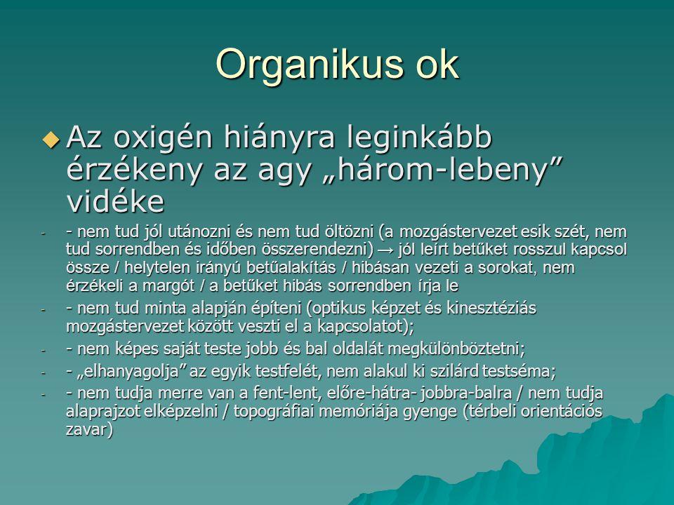 """Organikus ok Az oxigén hiányra leginkább érzékeny az agy """"három-lebeny vidéke."""