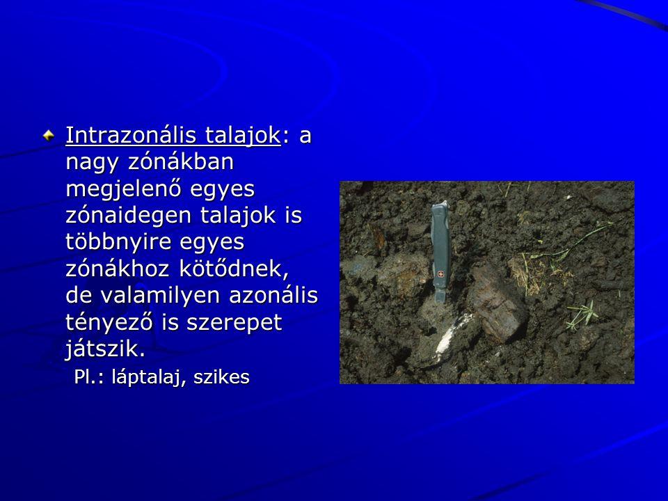 Intrazonális talajok: a nagy zónákban megjelenő egyes zónaidegen talajok is többnyire egyes zónákhoz kötődnek, de valamilyen azonális tényező is szerepet játszik.