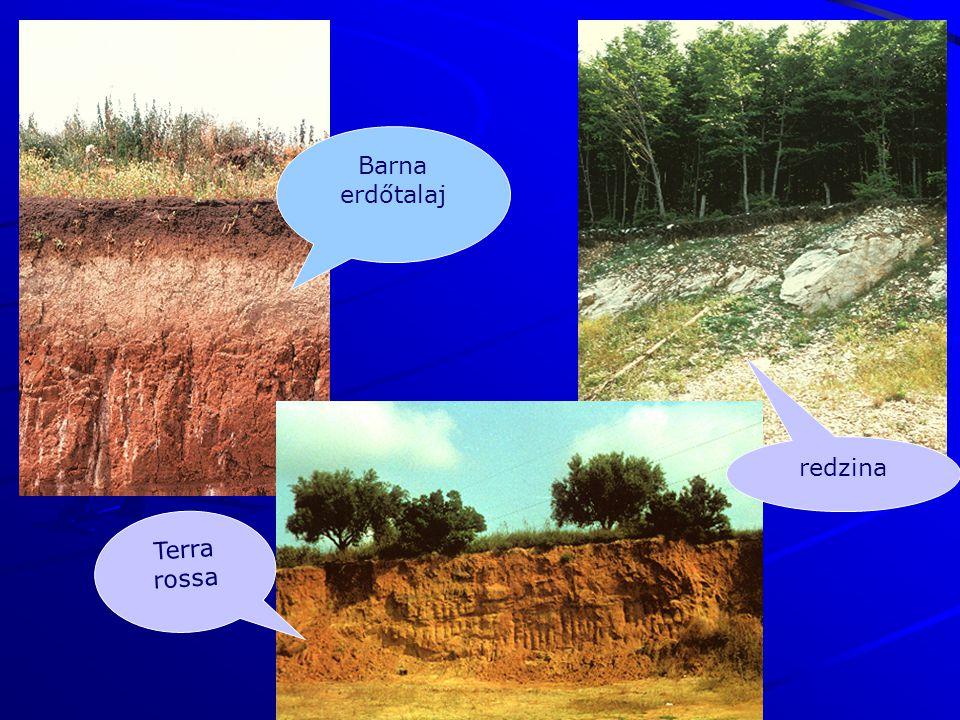 Barna erdőtalaj redzina Terra rossa