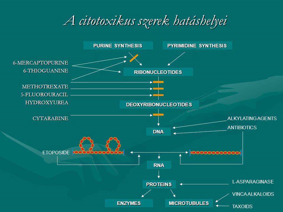 A citotoxikus szerek hatáshelyei