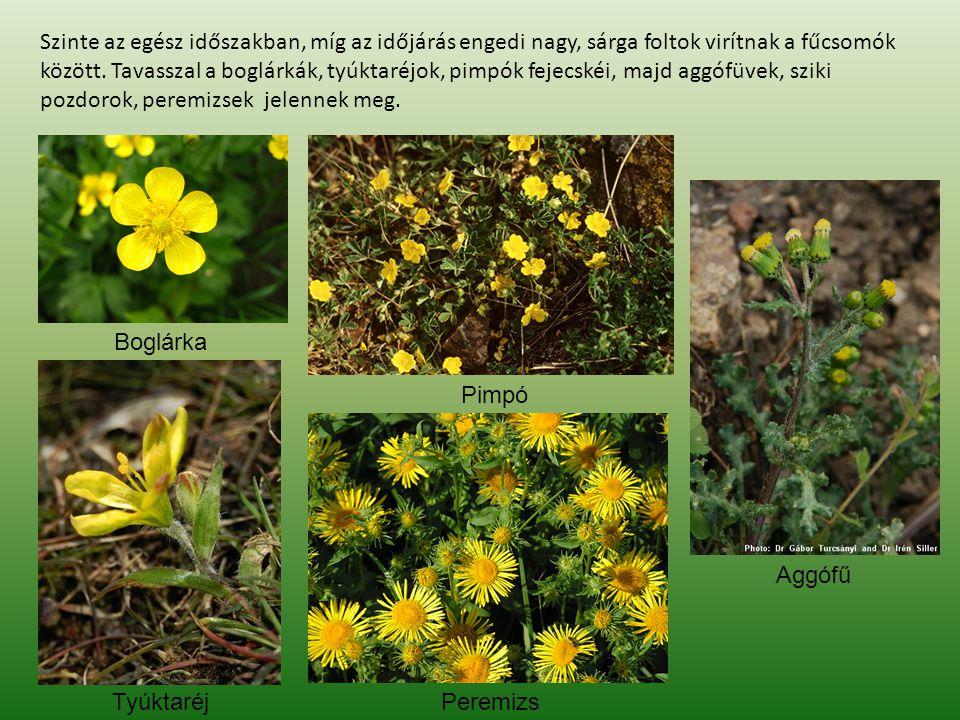 Szinte az egész időszakban, míg az időjárás engedi nagy, sárga foltok virítnak a fűcsomók között. Tavasszal a boglárkák, tyúktaréjok, pimpók fejecskéi, majd aggófüvek, sziki pozdorok, peremizsek jelennek meg.