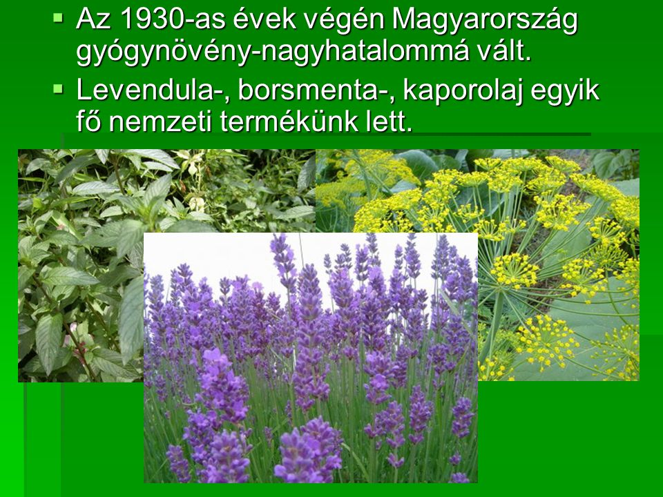 Az 1930-as évek végén Magyarország gyógynövény-nagyhatalommá vált.