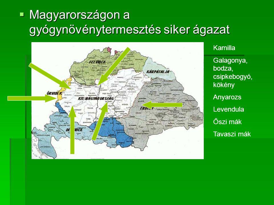 Magyarországon a gyógynövénytermesztés siker ágazat