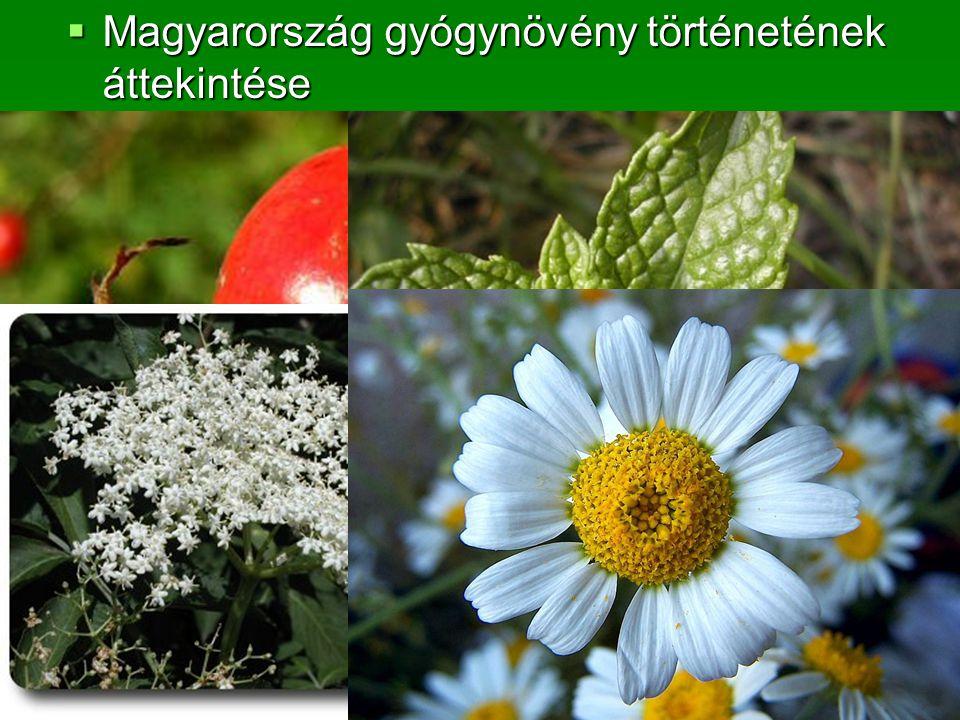 Magyarország gyógynövény történetének áttekintése