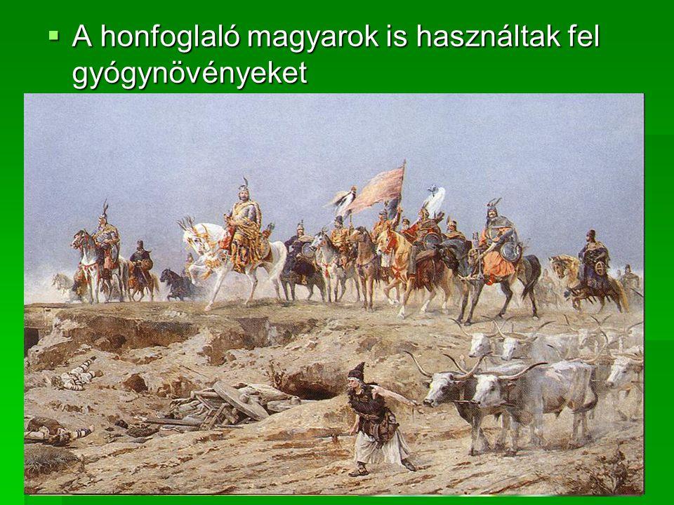 A honfoglaló magyarok is használtak fel gyógynövényeket