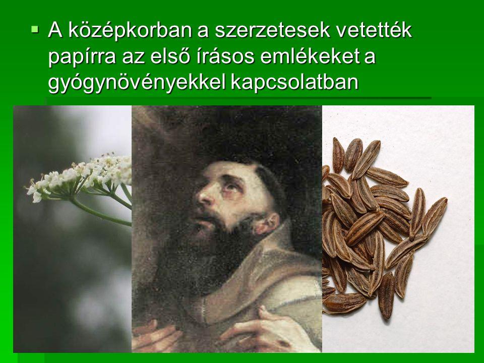A középkorban a szerzetesek vetették papírra az első írásos emlékeket a gyógynövényekkel kapcsolatban