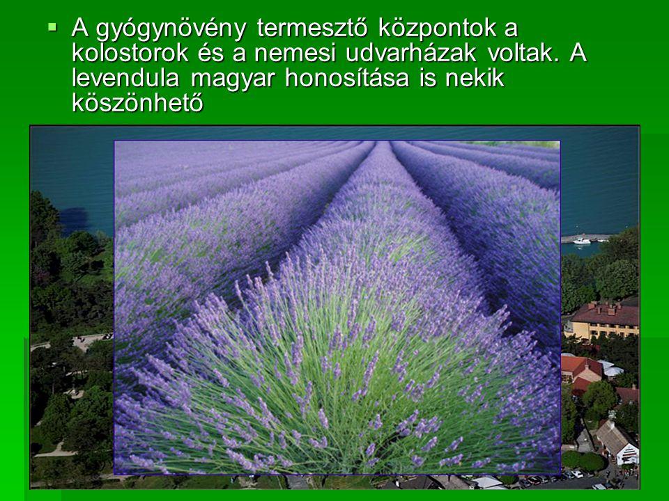 A gyógynövény termesztő központok a kolostorok és a nemesi udvarházak voltak.