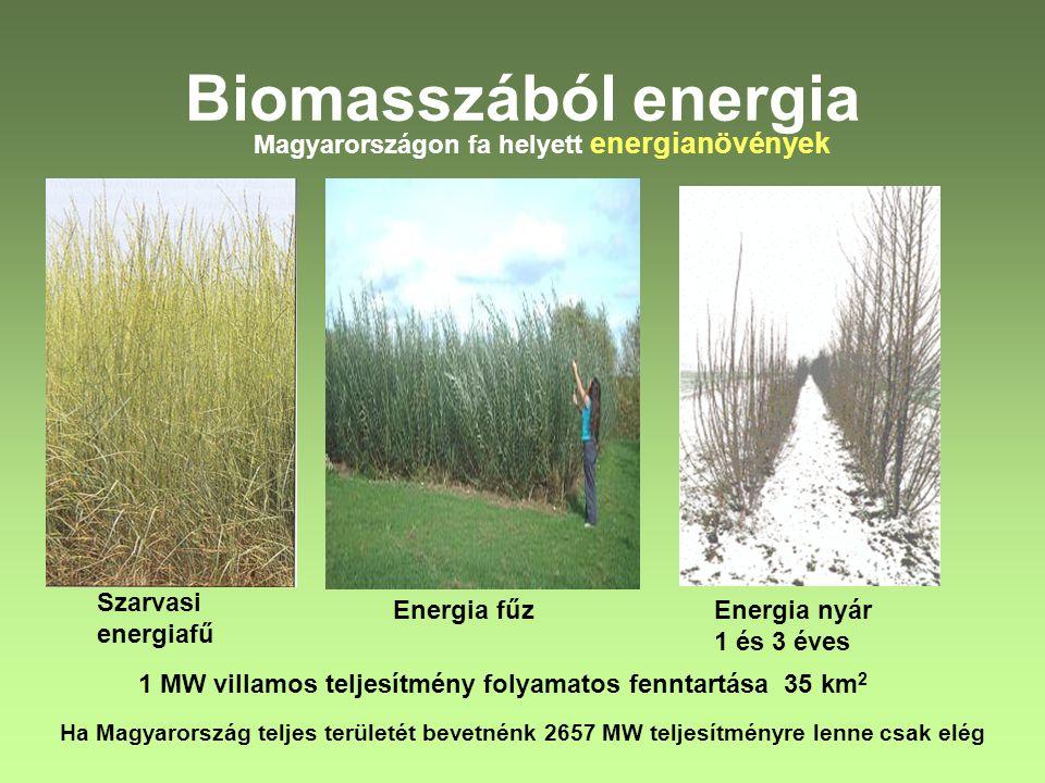 Biomasszából energia Magyarországon fa helyett energianövények