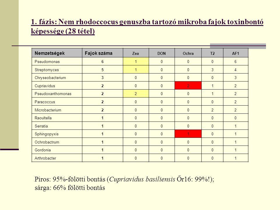 1. fázis: Nem rhodoccocus genuszba tartozó mikroba fajok toxinbontó képessége (28 tétel)