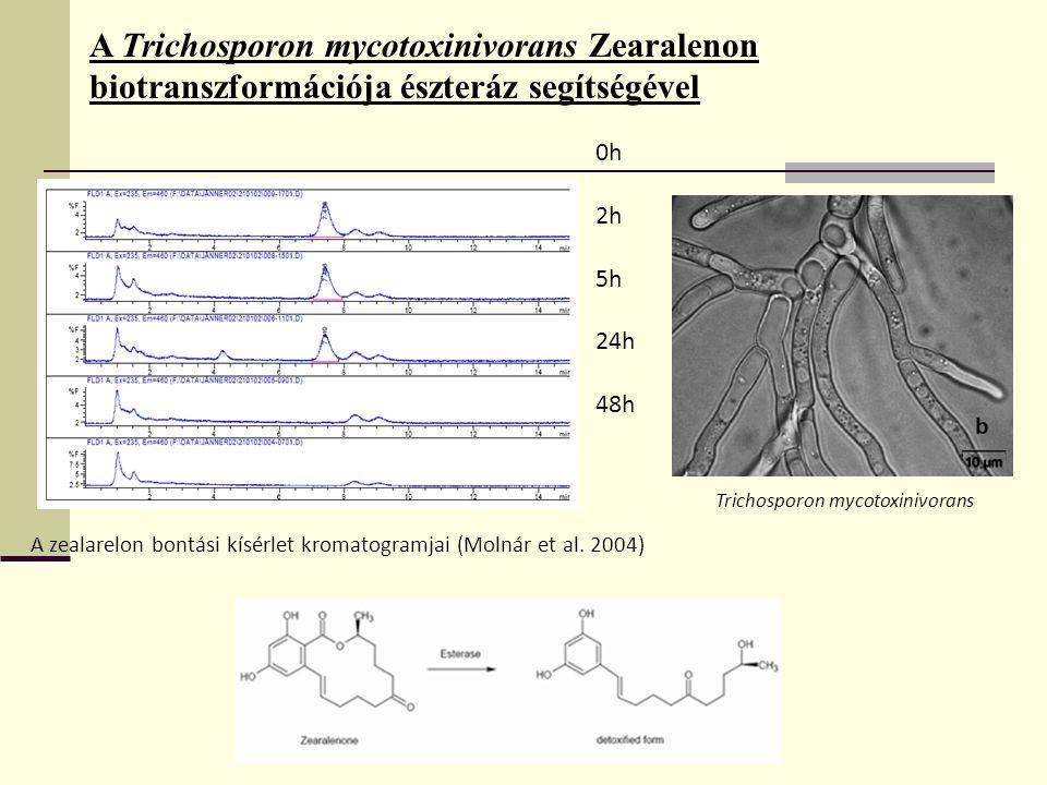 A Trichosporon mycotoxinivorans Zearalenon biotranszformációja észteráz segítségével
