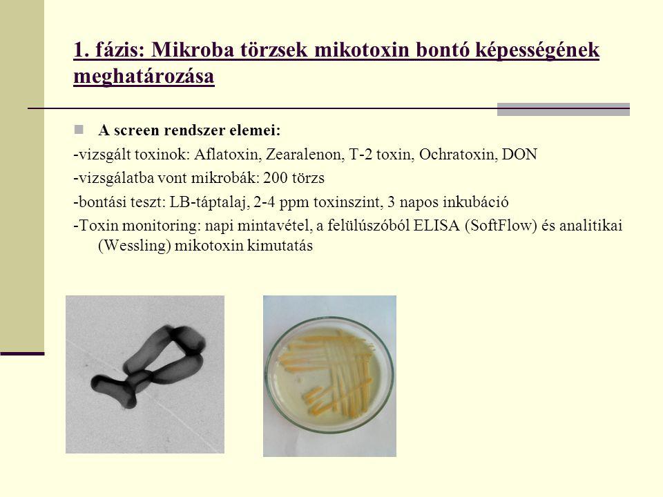 1. fázis: Mikroba törzsek mikotoxin bontó képességének meghatározása
