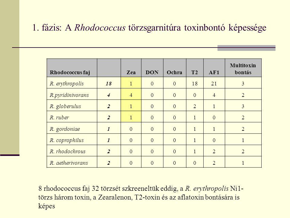 1. fázis: A Rhodococcus törzsgarnitúra toxinbontó képessége