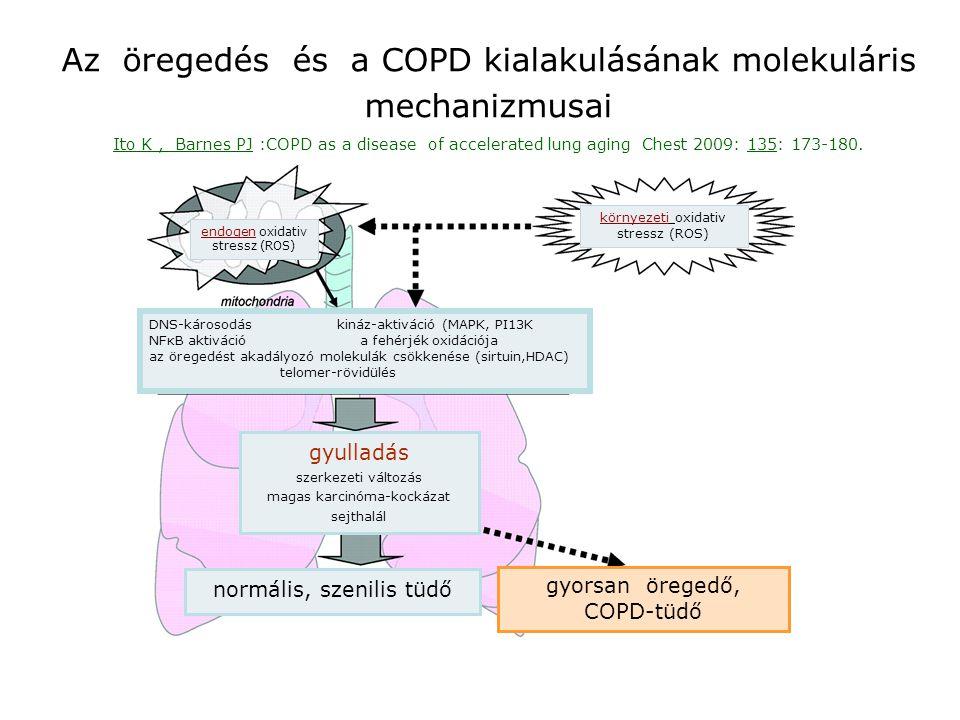 Az öregedés és a COPD kialakulásának molekuláris mechanizmusai