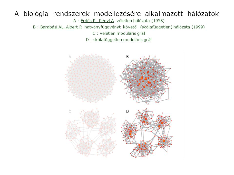 A biológia rendszerek modellezésére alkalmazott hálózatok