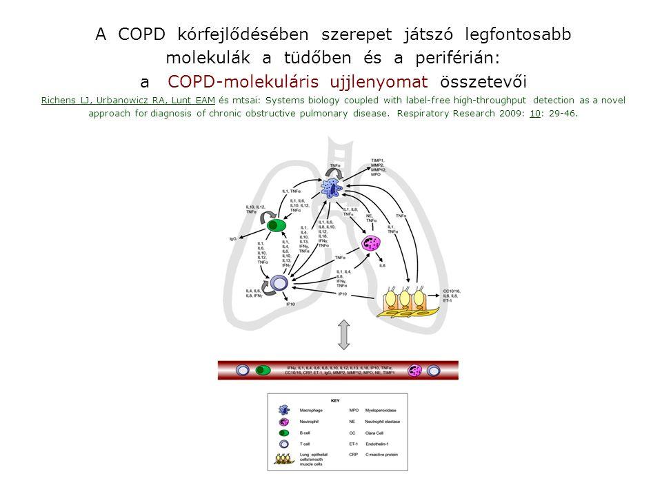 A COPD kórfejlődésében szerepet játszó legfontosabb
