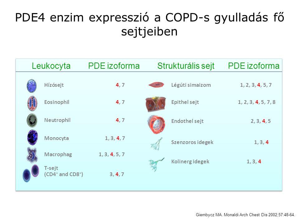 PDE4 enzim expresszió a COPD-s gyulladás fő sejtjeiben