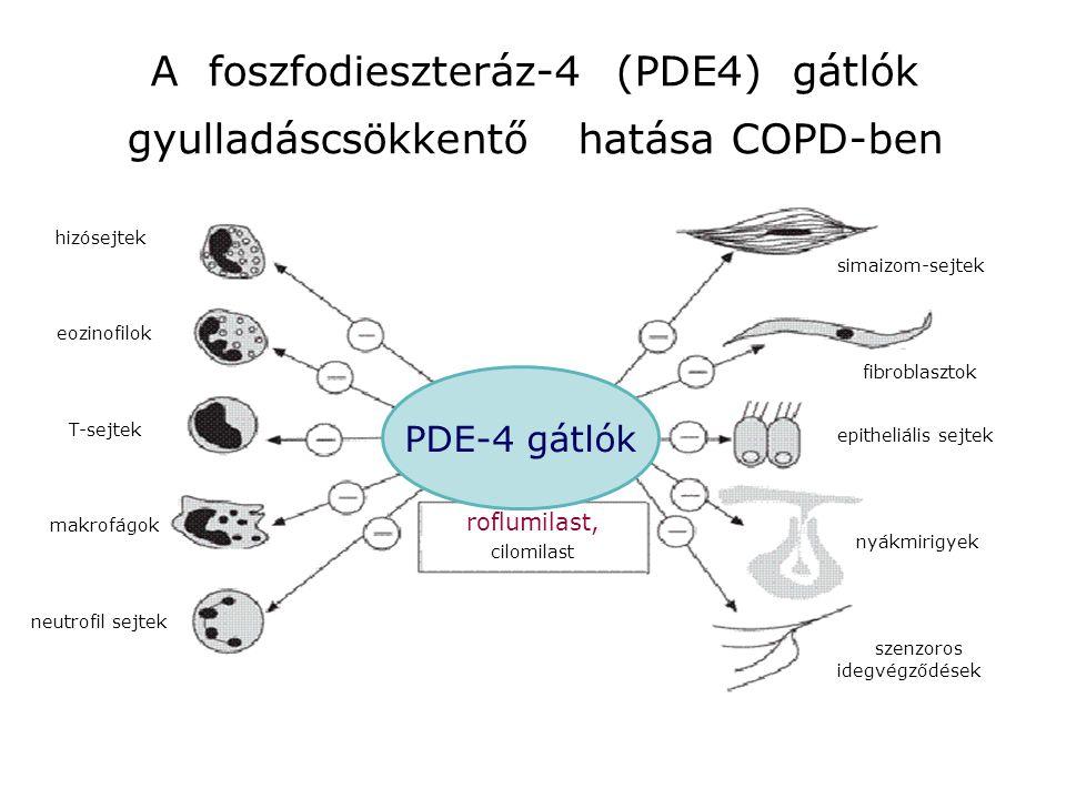 A foszfodieszteráz-4 (PDE4) gátlók gyulladáscsökkentő hatása COPD-ben