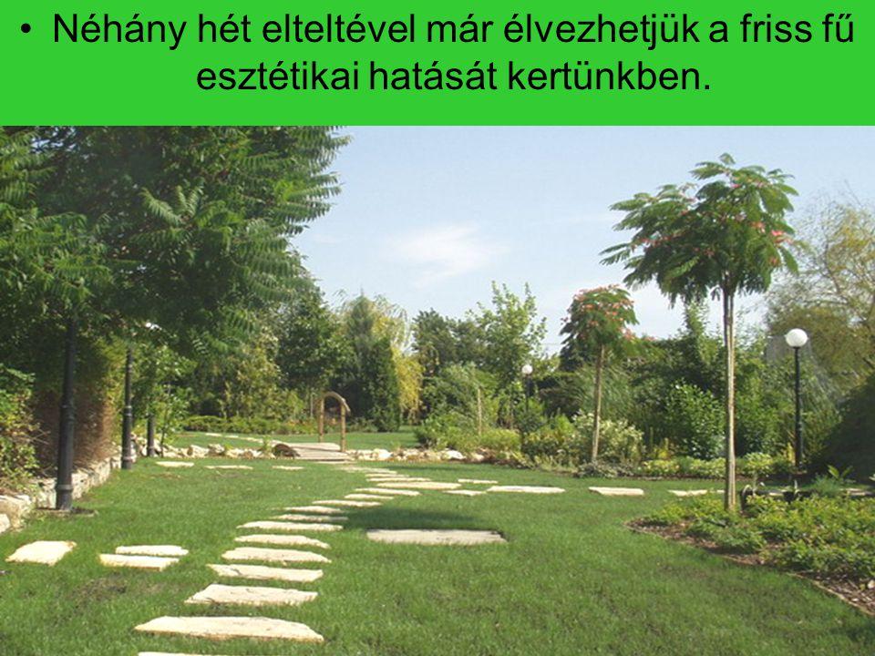 Néhány hét elteltével már élvezhetjük a friss fű esztétikai hatását kertünkben.