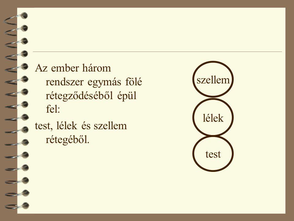 Az ember három rendszer egymás fölé rétegződéséből épül fel: