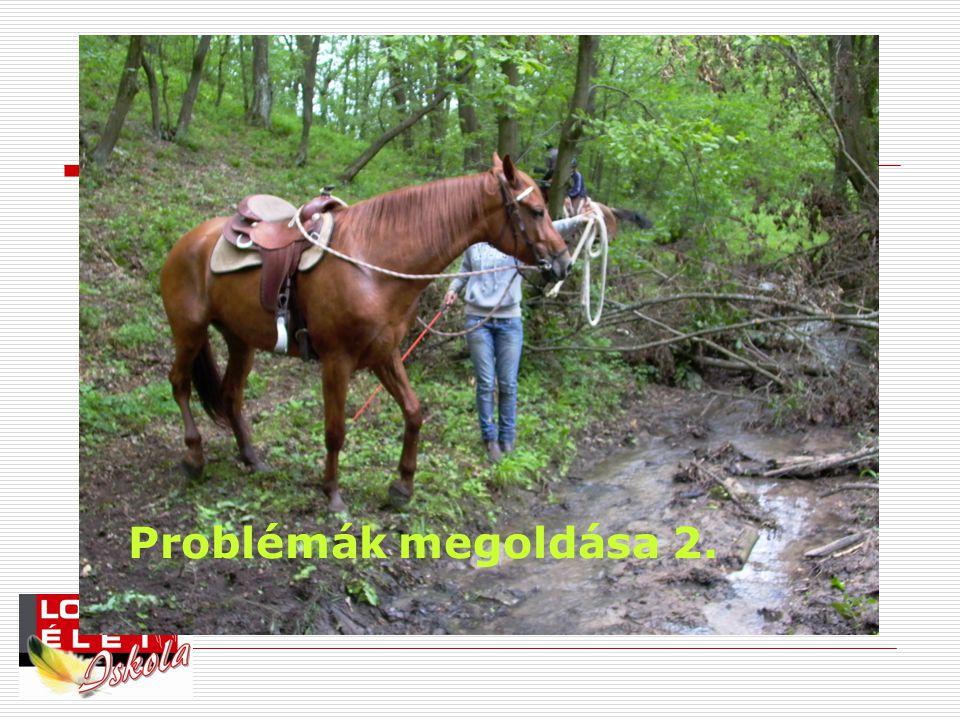 Problémák megoldása 2.
