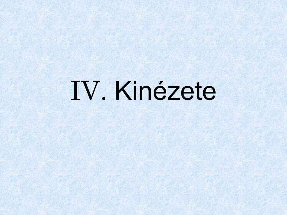 IV. Kinézete