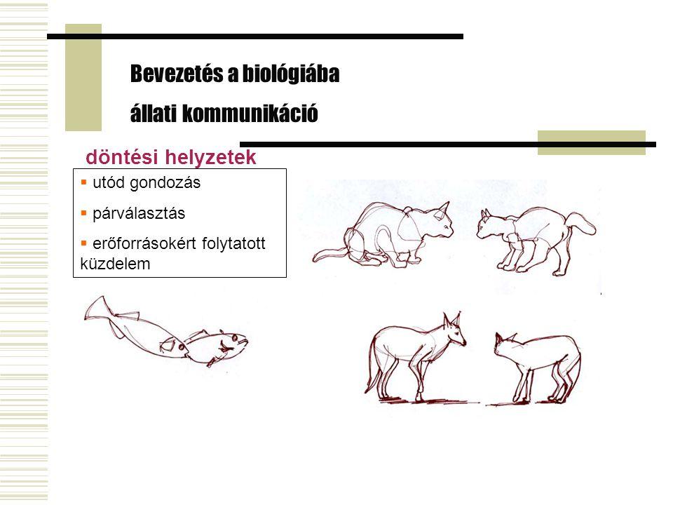 Bevezetés a biológiába állati kommunikáció