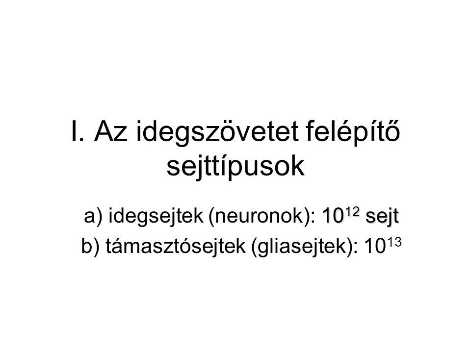 I. Az idegszövetet felépítő sejttípusok