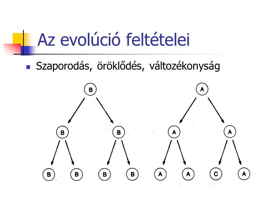 Az evolúció feltételei