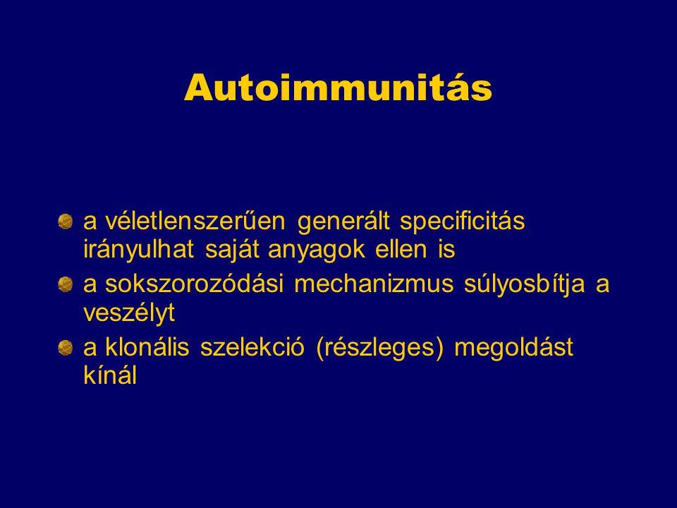 Autoimmunitás a véletlenszerűen generált specificitás irányulhat saját anyagok ellen is. a sokszorozódási mechanizmus súlyosbítja a veszélyt.