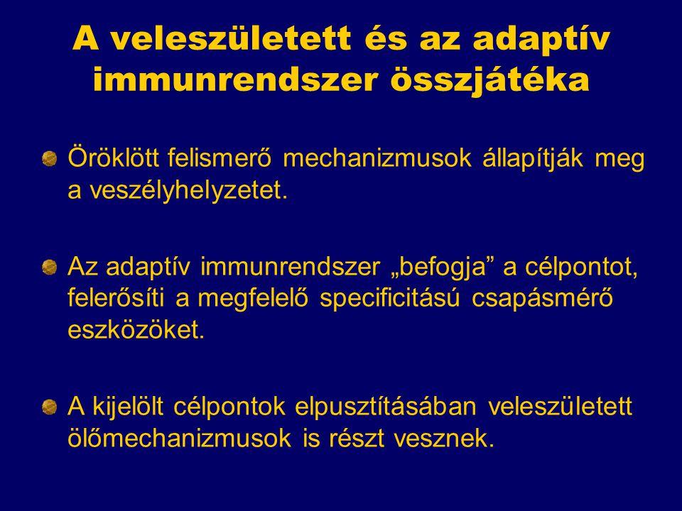 A veleszületett és az adaptív immunrendszer összjátéka