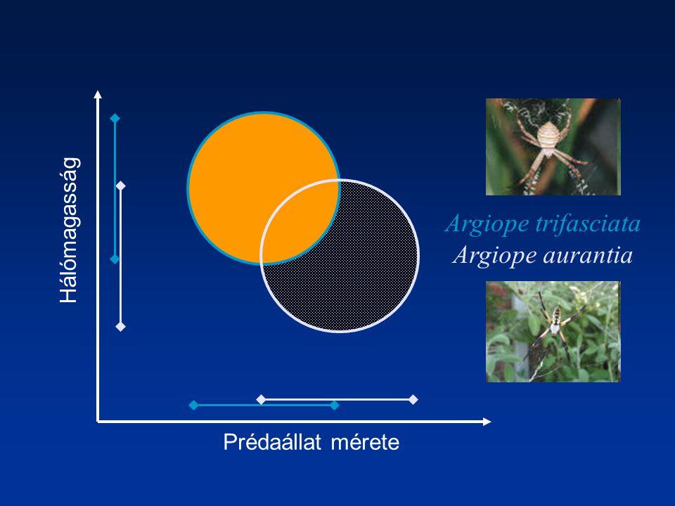 Argiope trifasciata Argiope aurantia Hálómagasság Prédaállat mérete