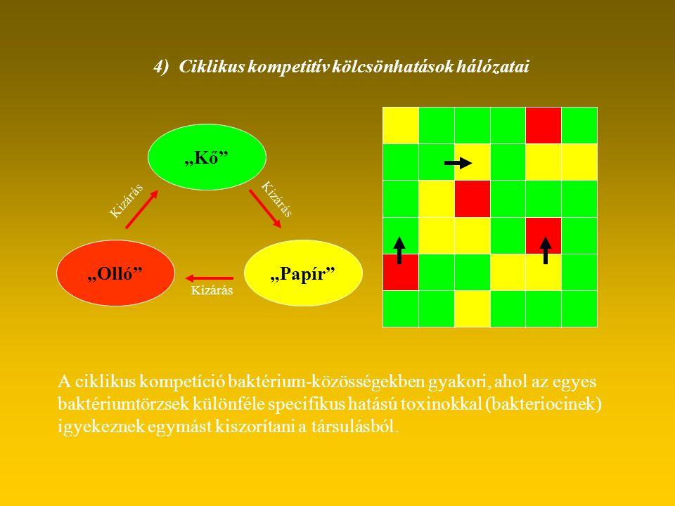 4) Ciklikus kompetitív kölcsönhatások hálózatai