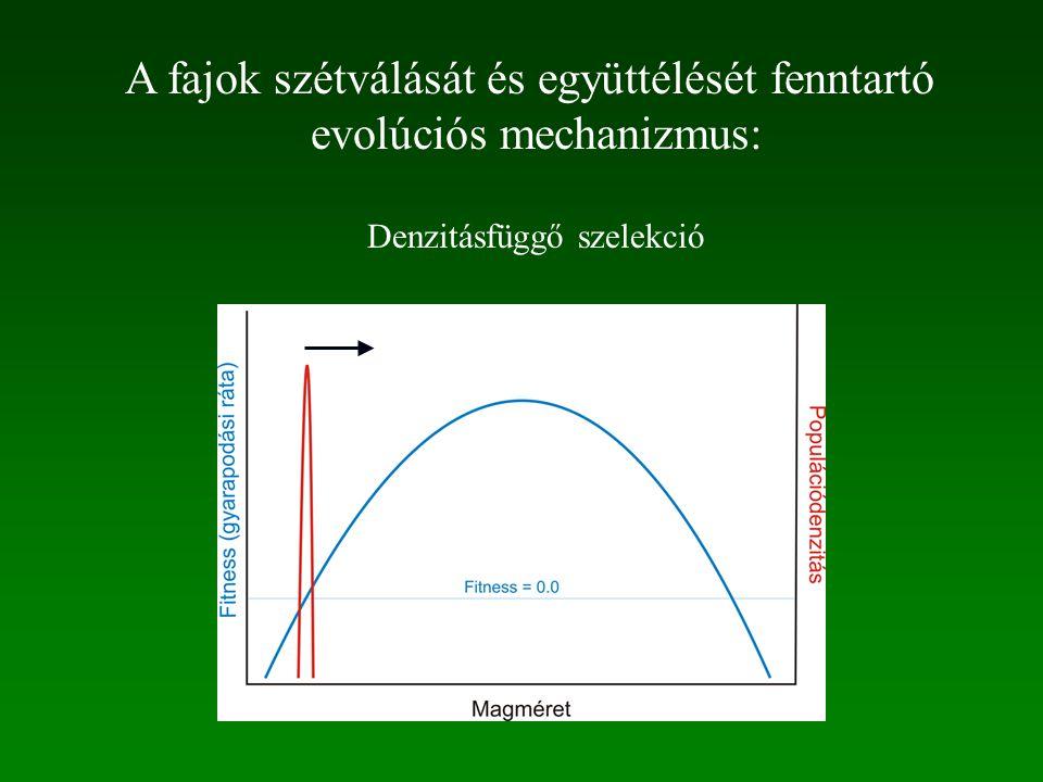 A fajok szétválását és együttélését fenntartó evolúciós mechanizmus: