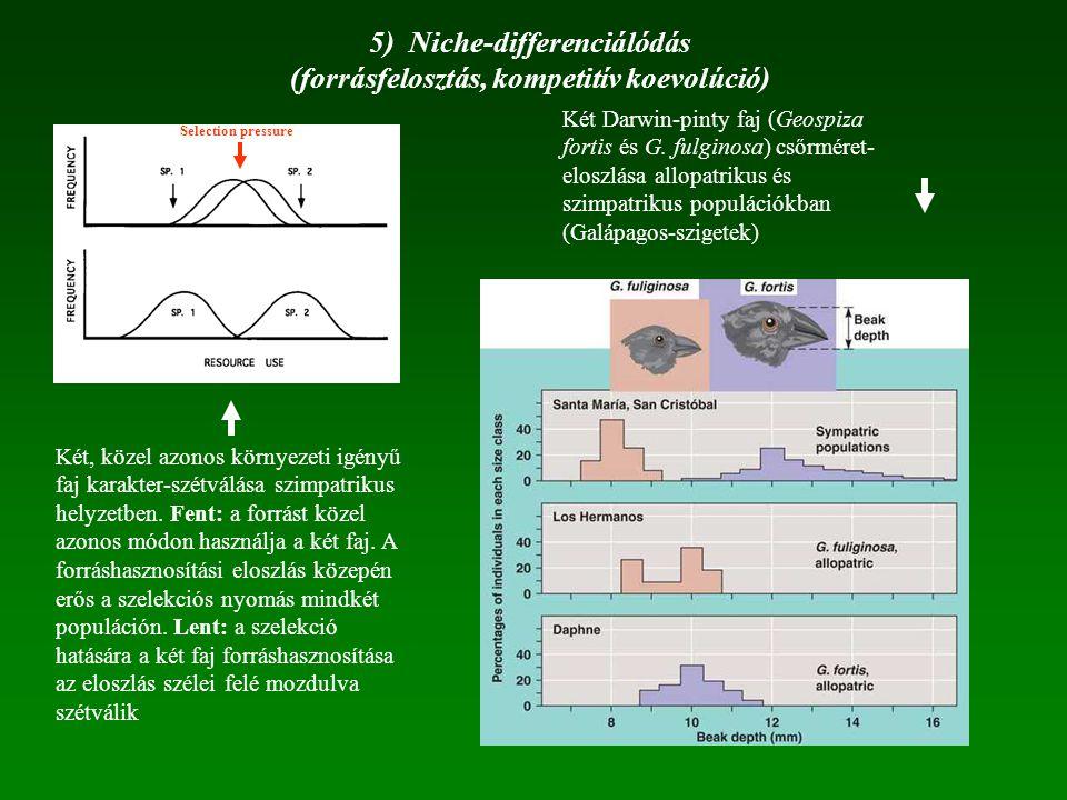 5) Niche-differenciálódás (forrásfelosztás, kompetitív koevolúció)