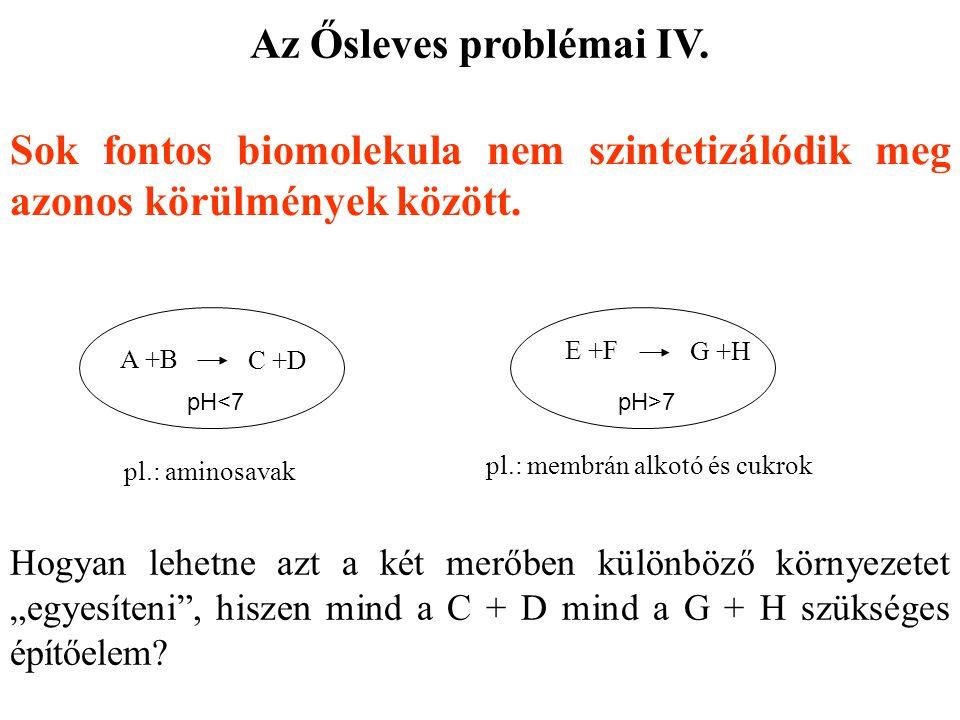 Az Ősleves problémai IV.
