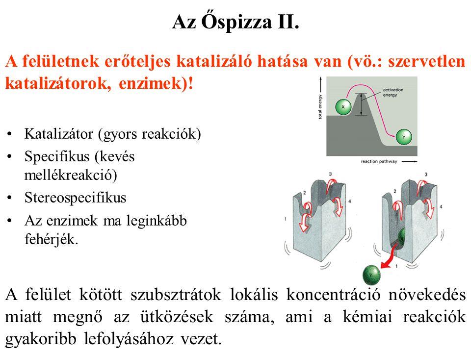 Az Őspizza II. A felületnek erőteljes katalizáló hatása van (vö.: szervetlen katalizátorok, enzimek)!