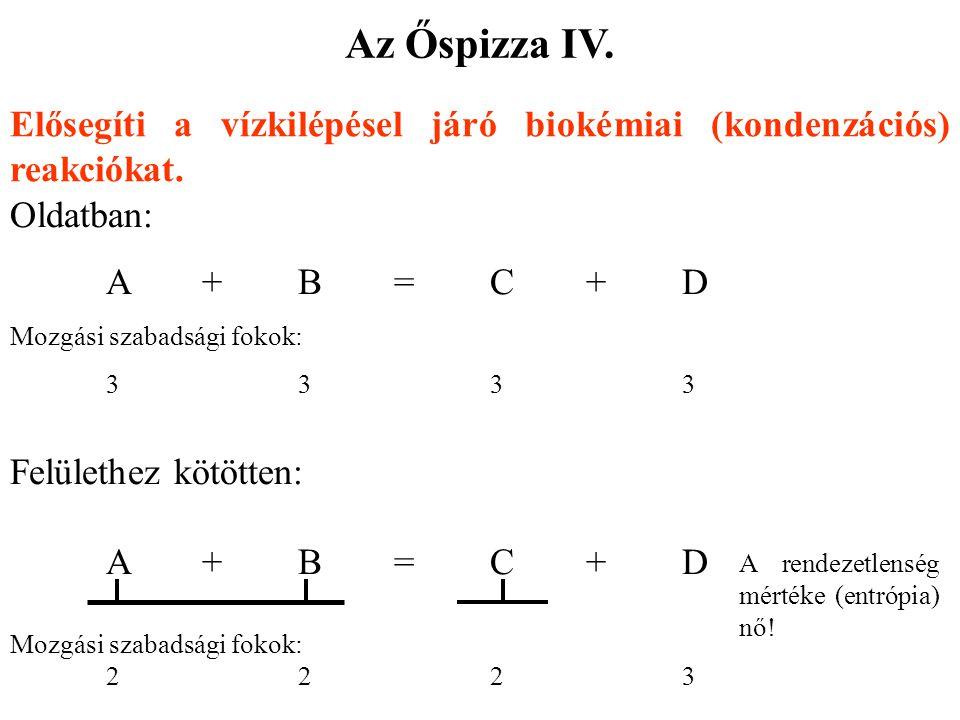 Az Őspizza IV. Elősegíti a vízkilépésel járó biokémiai (kondenzációs) reakciókat. Oldatban: A + B = C + D.