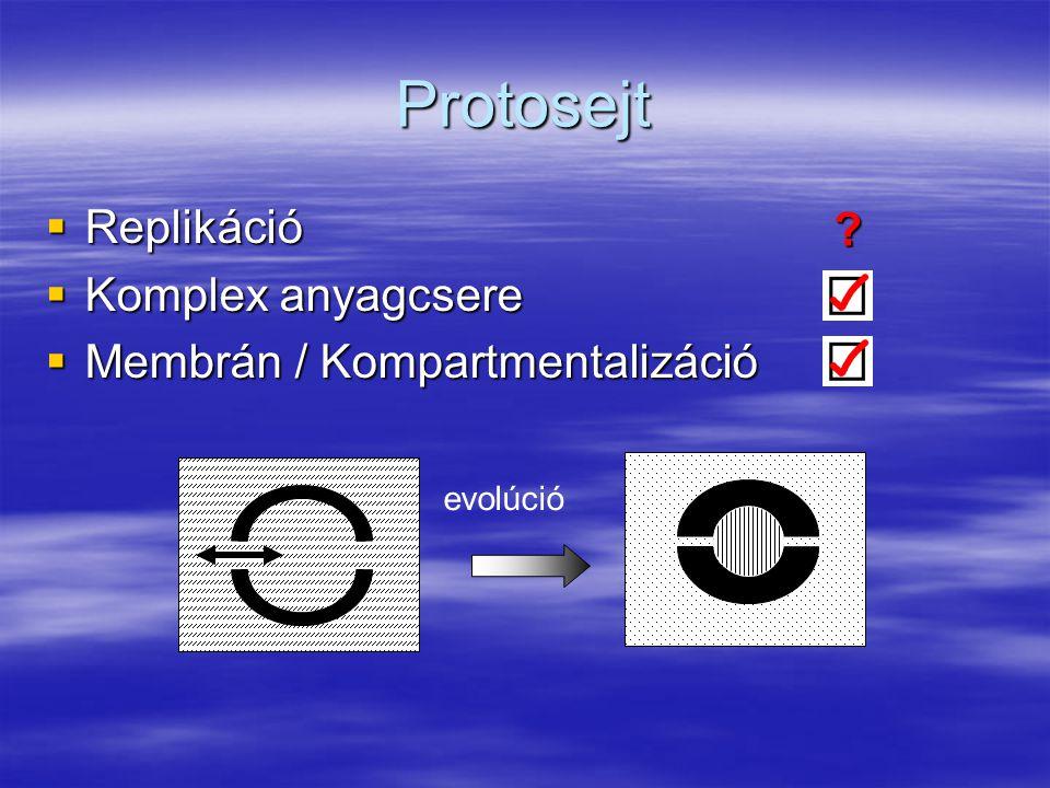 Protosejt Replikáció Komplex anyagcsere