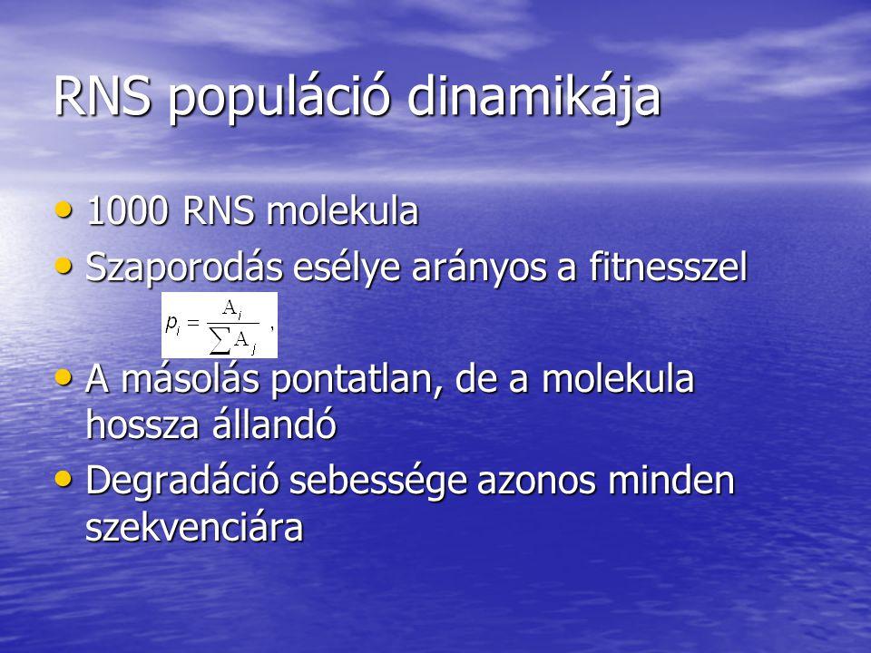 RNS populáció dinamikája
