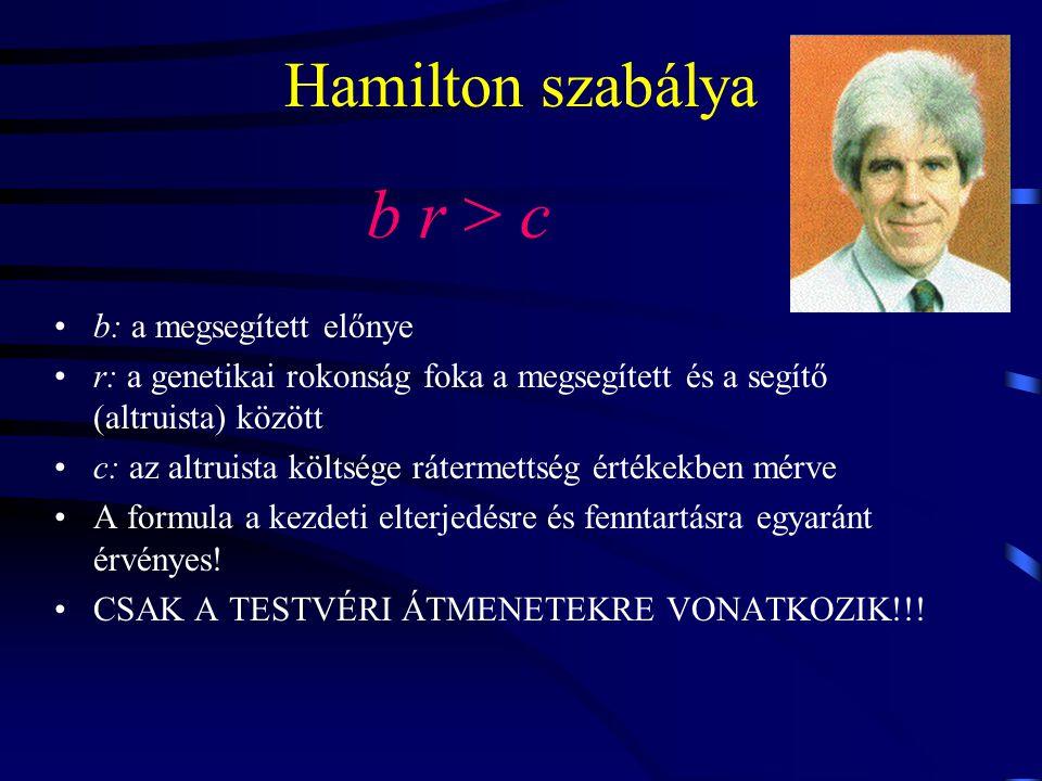 Hamilton szabálya b r > c b: a megsegített előnye