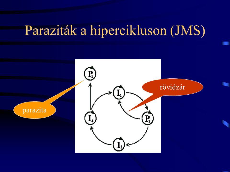 Paraziták a hipercikluson (JMS)