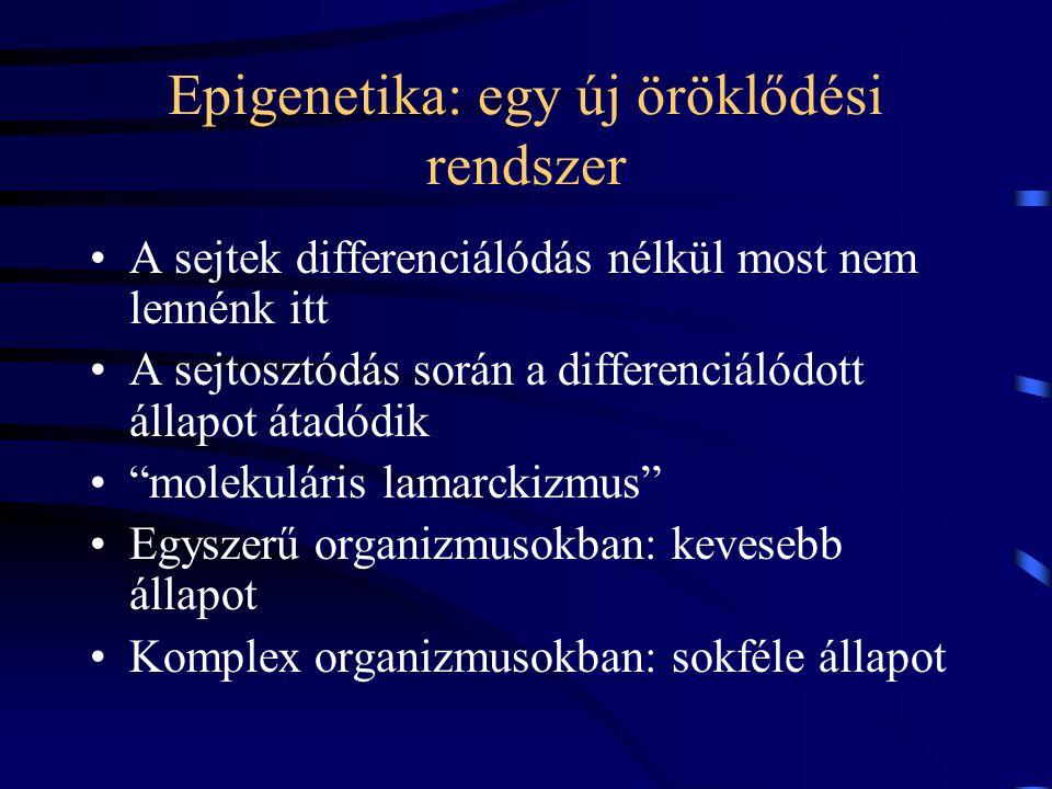 Epigenetika: egy új öröklődési rendszer