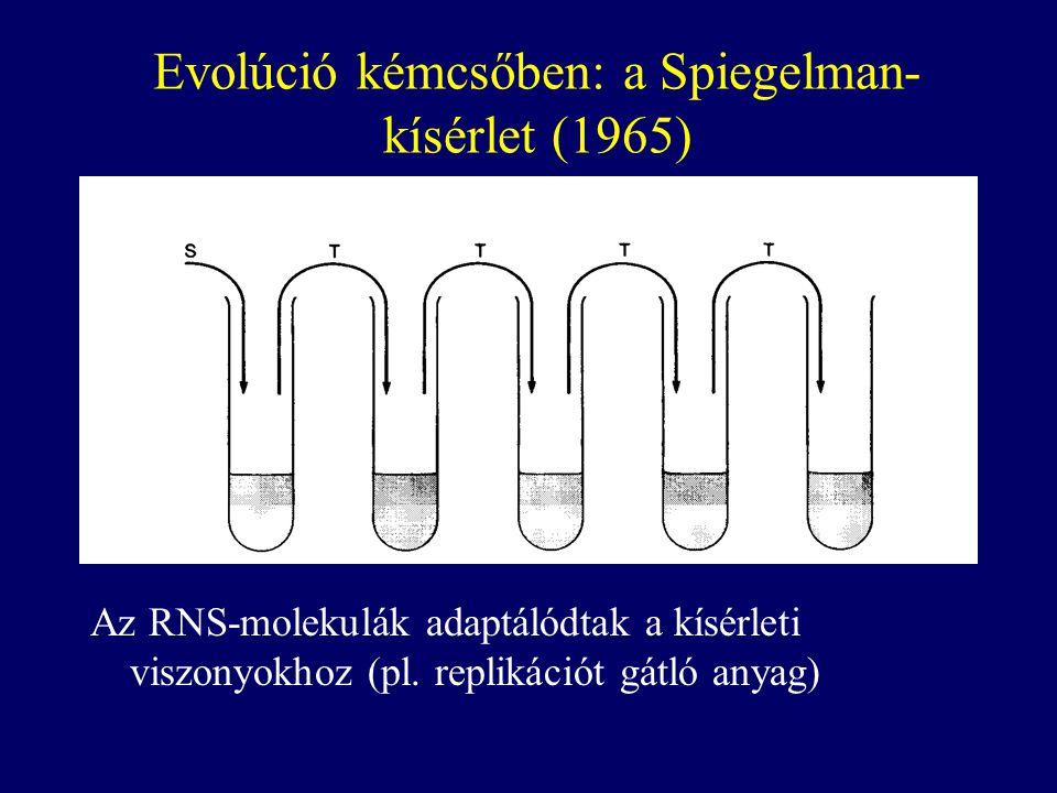 Evolúció kémcsőben: a Spiegelman-kísérlet (1965)
