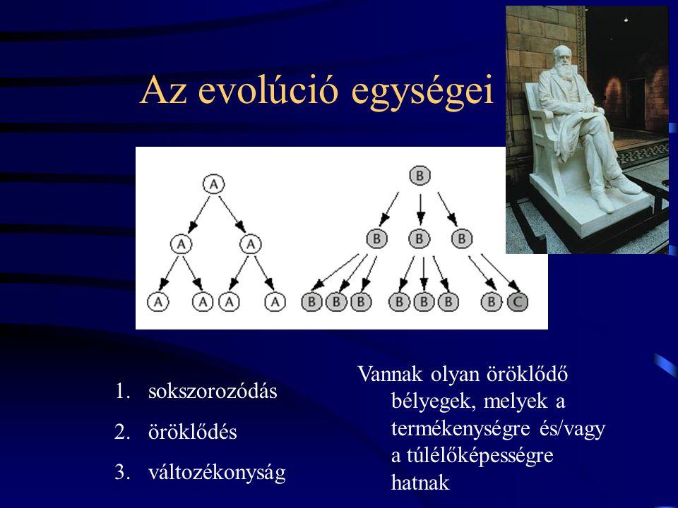 Az evolúció egységei Vannak olyan öröklődő bélyegek, melyek a termékenységre és/vagy a túlélőképességre hatnak.