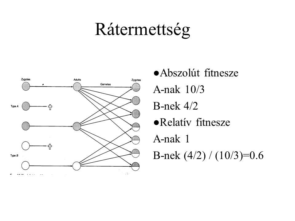 Rátermettség ●Abszolút fitnesze A-nak 10/3 B-nek 4/2 ●Relatív fitnesze