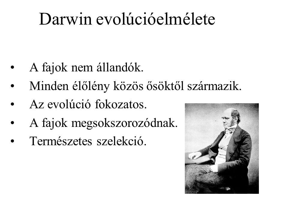 Darwin evolúcióelmélete